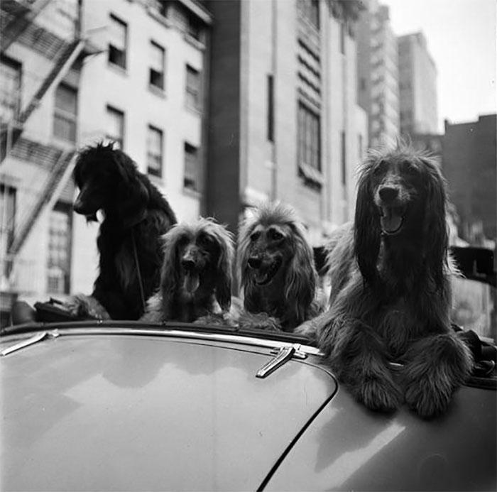 vintage-photographs-new-york-street-life-stanley-kubrick-8-59a94581034c2_700.jpg