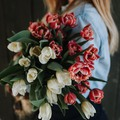 Ismerd meg a termelőt: innen érkeznek Pestre a legszebb tulipánok!