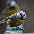 A Mátrában kirándulsz? Ilyen madarakkal találkozhatsz!