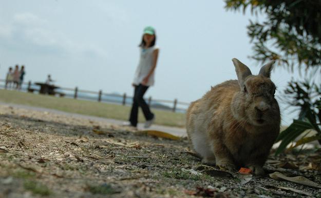 bunny-island-1.jpg