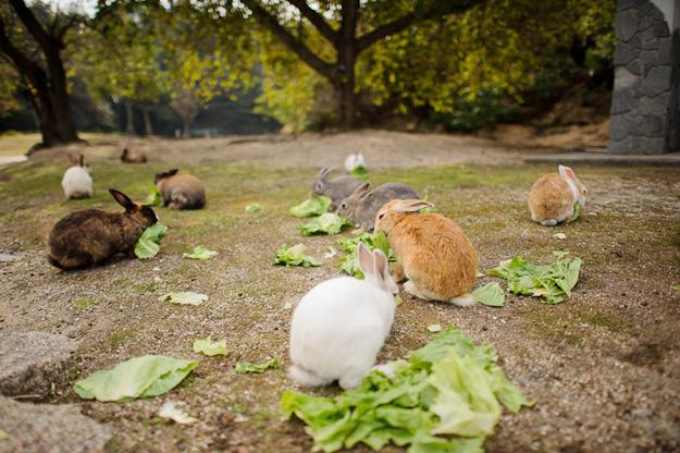 bunny-island-2.jpg