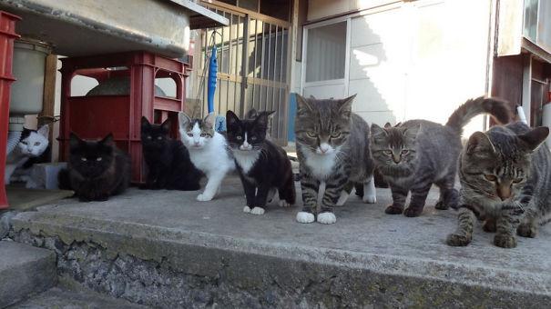 cat-island-3.jpg