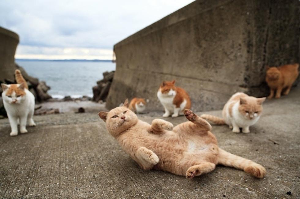 cat-island-4.jpg