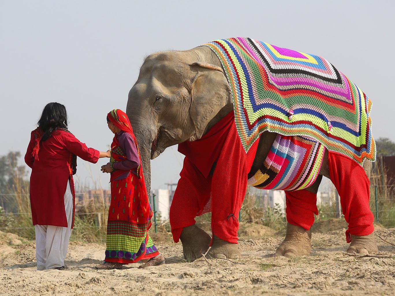elephant-jumpers-4.jpg