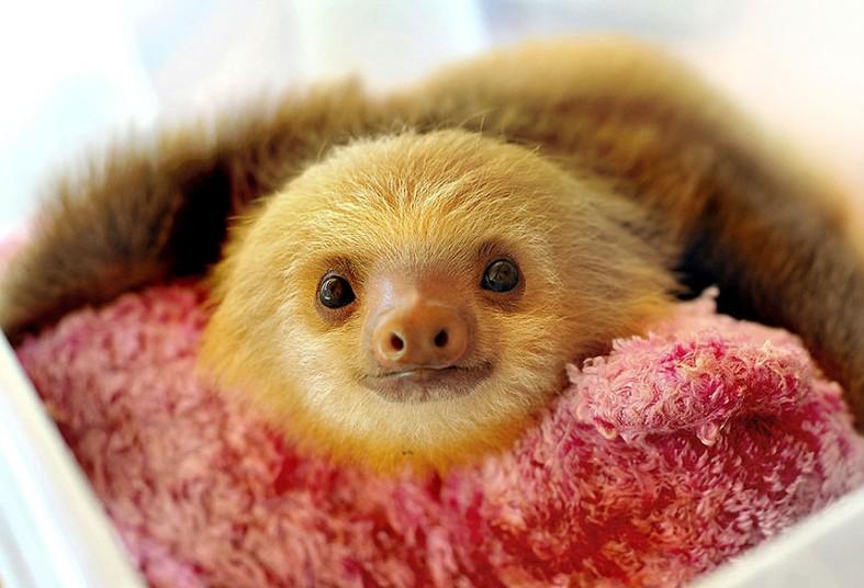 sloth_sanctuary_11_2928207k.jpg