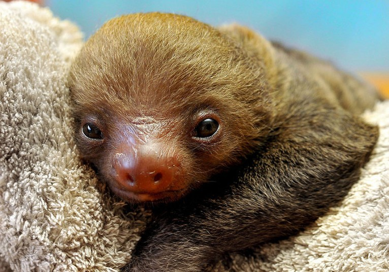 sloth_sanctuary_2_2928185k.jpg