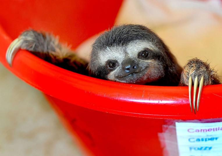 sloth_sanctuary_4_2928191k.jpg