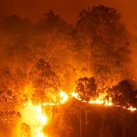 """Lángokban a """"Föld tüdeje"""" – mi lesz az oxigénnel?"""