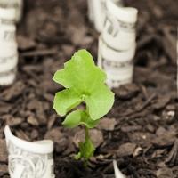 A fenntarthatóság egyre inkább üzleti érdek