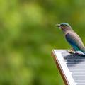 Mesterséges intelligencia madárlesen