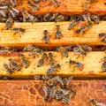 A méheket megmentik, ugye?