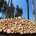 Fakitermelés és faültetés – mennyit, miért, hogyan?