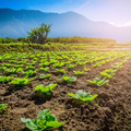 Harmóniában a természettel: az ártéri gazdálkodás múltja és jelene