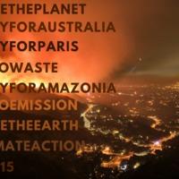 Hashtagekkel a klímaváltozás ellen – milyen irányba befolyásolja a közösségi média a környezet- és állatvédelmet?
