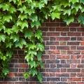 Aszfalt és borostyán: így növelhetjük a zöldfelületeket