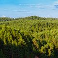 Látni majd a drónoktól az erdőt?