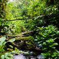 Az esőerdők megóvásával egy újabb világjárványt előzhetünk meg