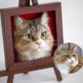 3D cica portré