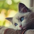 Miért nem szobatiszta a cicám?