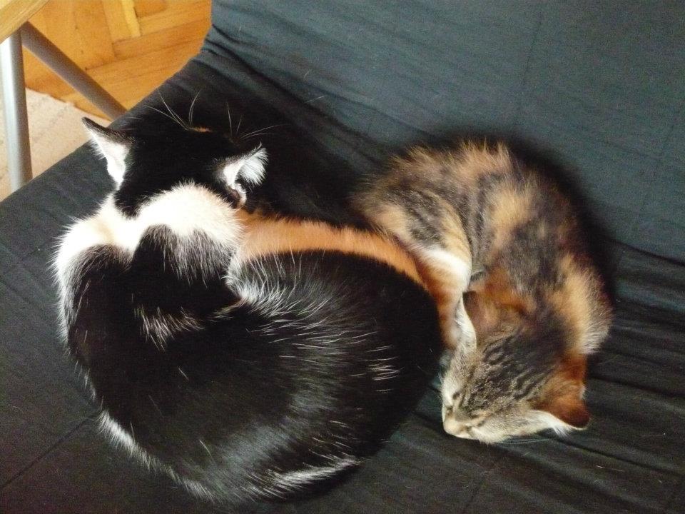 Sayang és Sushi - Első közös alvás.jpg