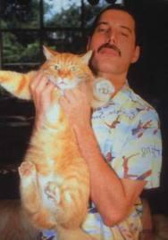 """Képtalálat a következőre: """"freddie mercury macskái"""""""