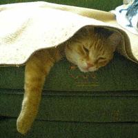 Alvás a takaró alatt