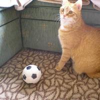 Itt az EB, én is kedvet kaptam a focihoz :)