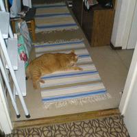 Ismerkedem az új szőnyegekkel