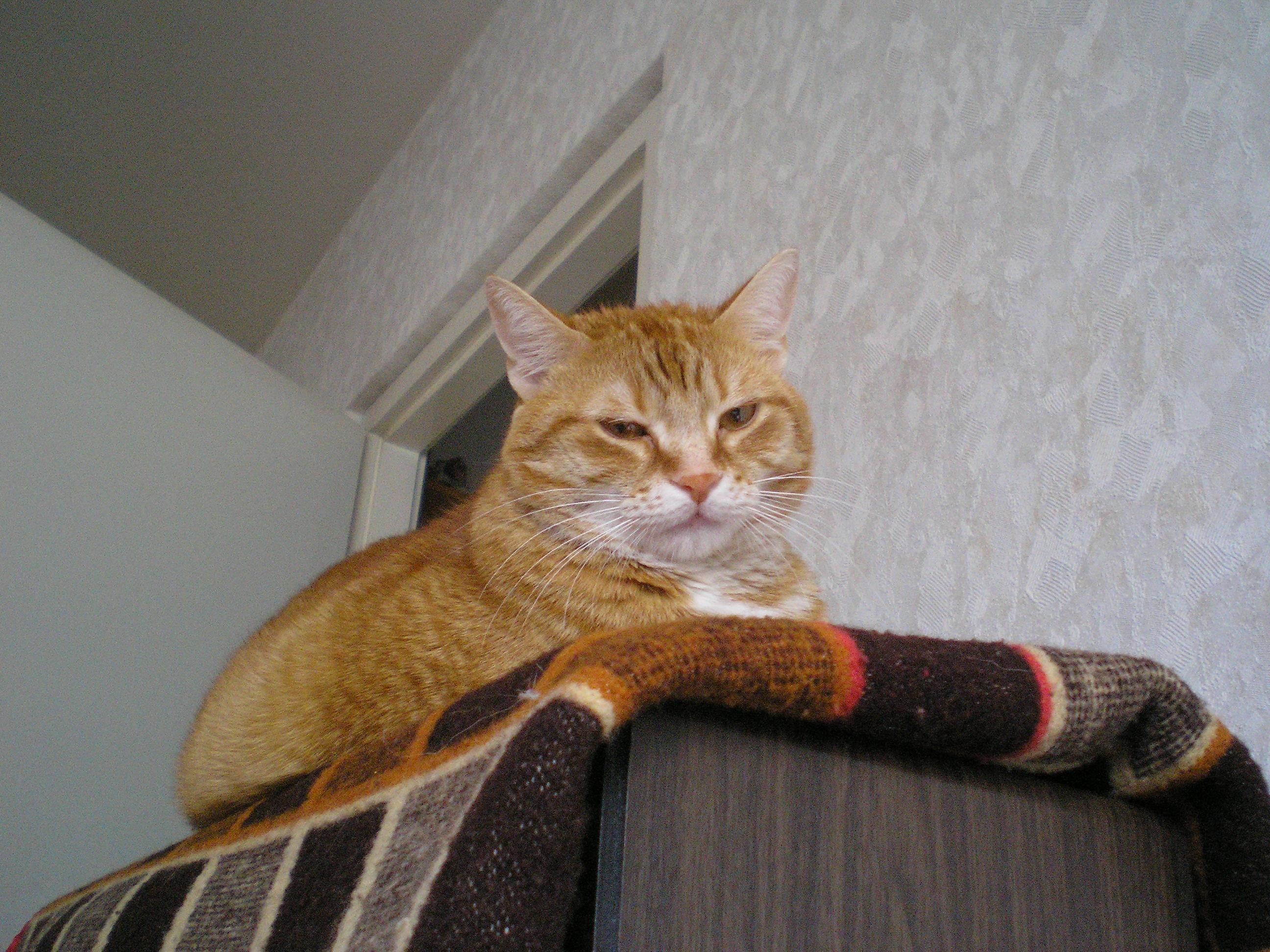 Macska Lap