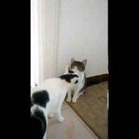 Kunyerálós videó