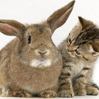 Kellemes Húsvétot kívánunk!