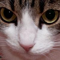 A macskakilövő – avagy a