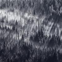 Tejfehér ködben úszó erdők