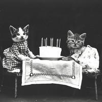 Cukiság őrület az 1900-as évekből
