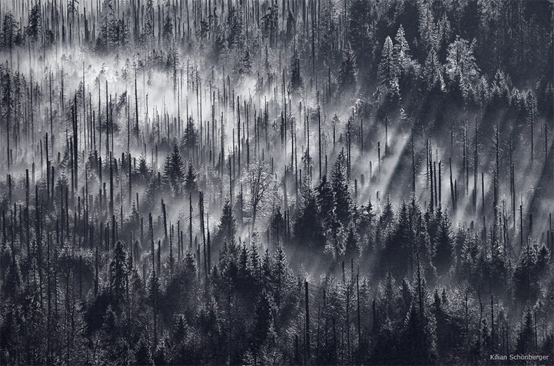forests-2.jpg