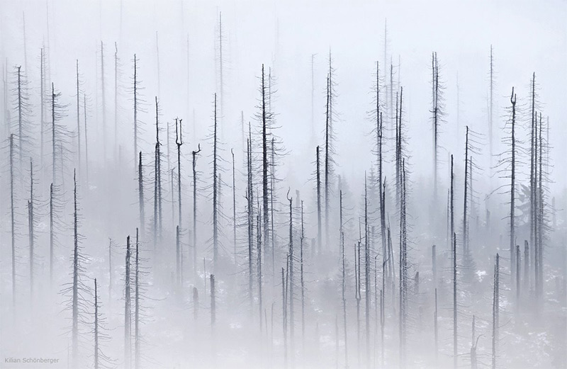 forests-4.jpg