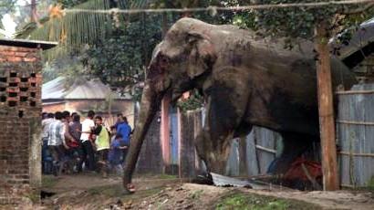 A pánik és az elefánt