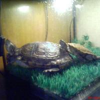 Teki és Tekila