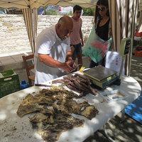 Ciprusi élménybeszámoló - újból falunapon jártunk
