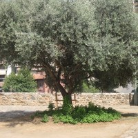 Ciprus látnivalói - Kakopetria