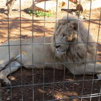 Paphos környéki látnivalók - Paphos Zoo - képekkel megspékelve