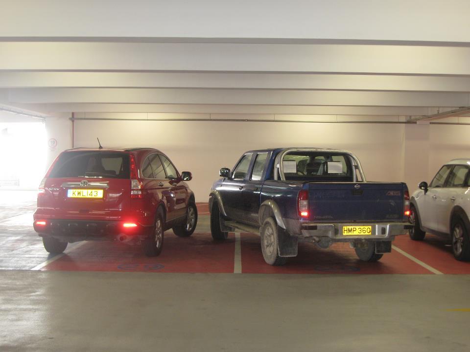 Parkolás cipruson.jpg