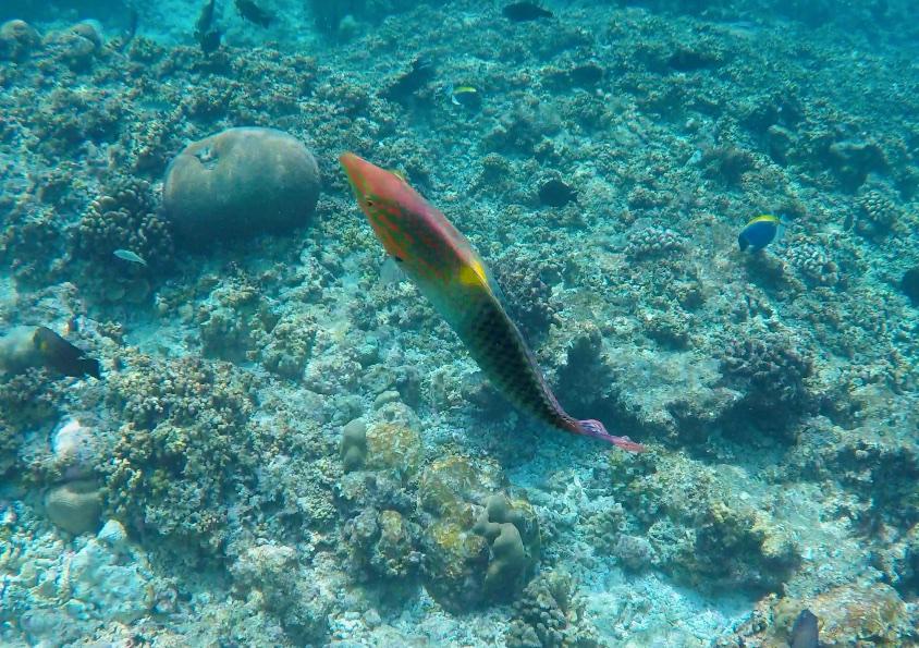 Színpompás halak