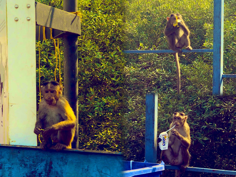 Majmok mindenütt...