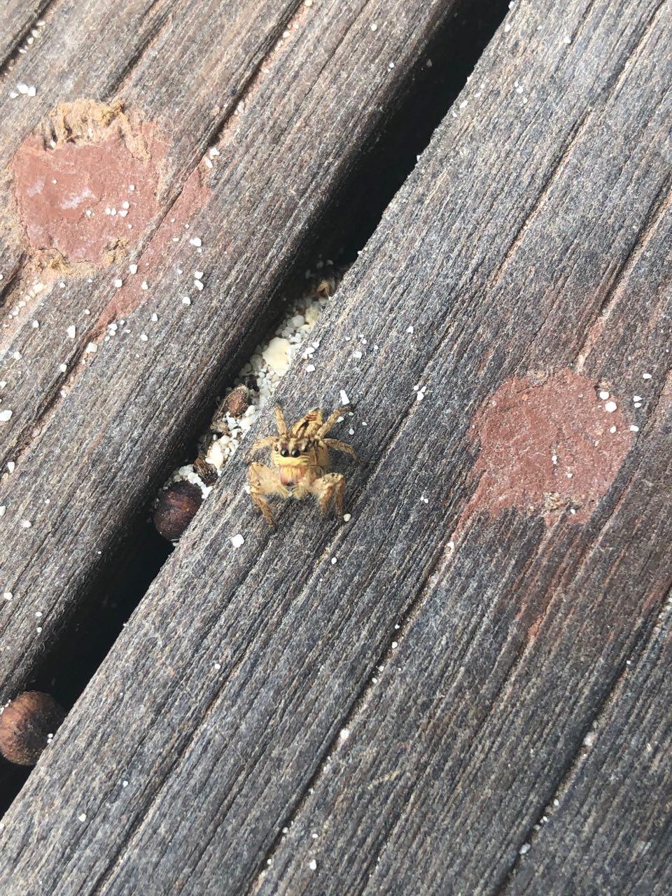 Egy cuki pók, rám nézett a kis szemeivel! :D
