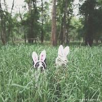 Nyuszi ül a fűben...