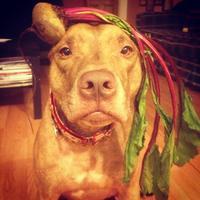 Scout, a világ legtürelmesebb kutyája
