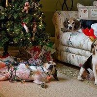 Vigyázz, kész, Karácsony!