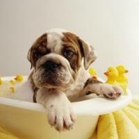 9 tipp kutyafürdetéshez
