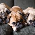 Az 5 legjobb kutyafajta lusta gazdiknak